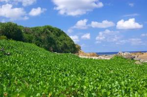 Ilha Amami. Flicr id: Takayukix