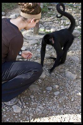 Foto de Macaco no Parque Machia por thekjkev e sob a licença Creative Commons.