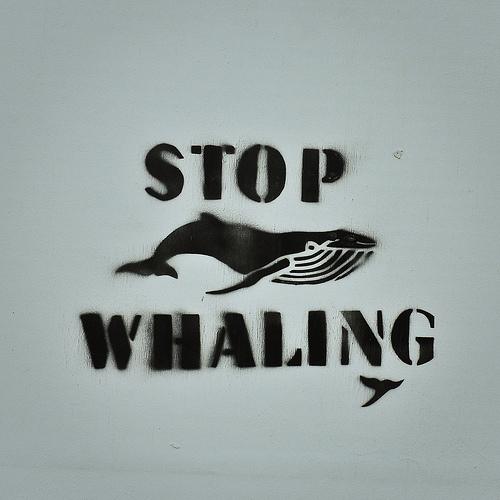 Pare com a caça às baleias. Por alisonlongrigg, no Flickr.