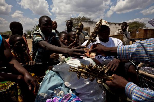Na aldeia moçambicana de Madamba (província de Tete) os locais mantêm o negócio de caça e venda de ratazanas na berma da estrada. Uma espetada de 6 a 7 ratazanas custa 10 meticais (20 cêntimos de euro). Foto de Vlad Sokhin copyright Demotix (29/09/2010)
