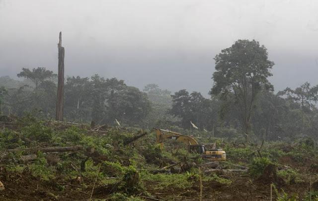"""""""Ao longe uma escavadora fazia o seu trabalho implacavelmente enquanto toda a paisagem parecia chorar a destruição causada."""""""