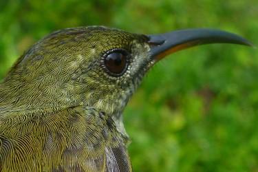 Resultado de imagem para biodiversidade em são tomé e principe
