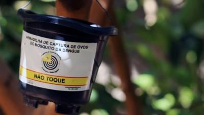 Armadilha da dengue. Foto: Coletivo Nigéria/Agência Pública