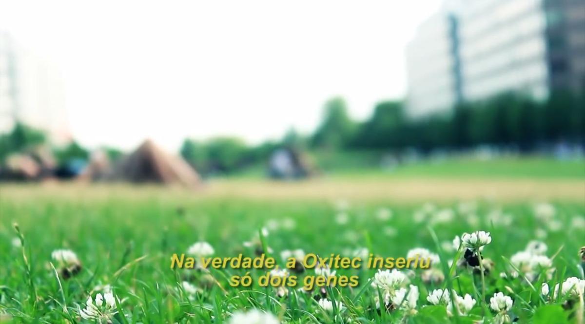 Antes de cidade brasileira, testes com mosquitos soltos em cidades já haviam sido realizados na América Central. Foto: Reprodução/Coletivo Nigéria