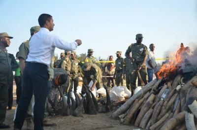 Incineração de cornos de marfim em Moçambique