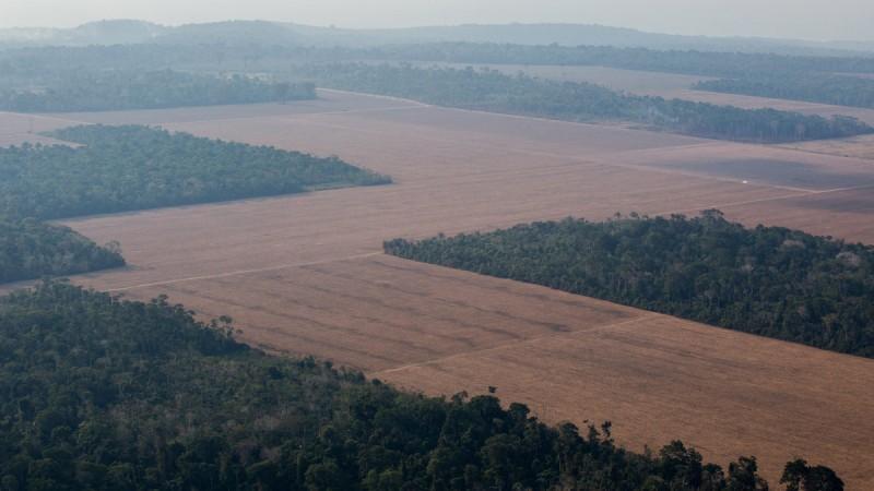 ¡rea de plantio de soja no arredores de SantarÈm e Belterra. FLAVIO FORNER/XIB…/INFOAMAZONIA