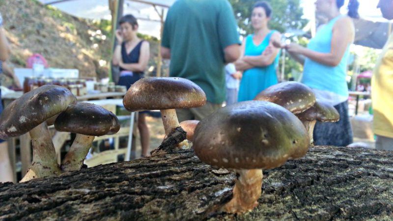 """Produtores locais mostram os seus produtos no eco festival """"Terra Mãe"""". Foto: Manuel Ribeiro"""